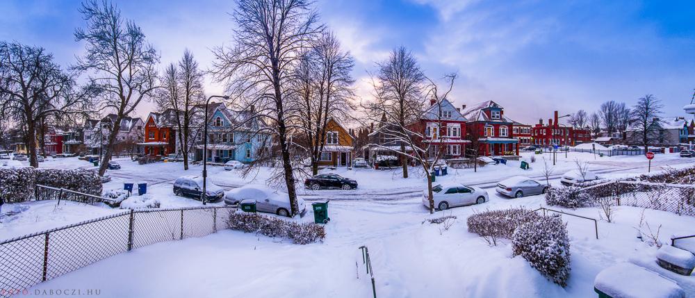 51_buffalo_winter_snow_daboczi_gergely